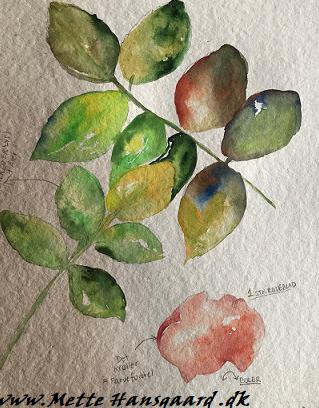 Akvarel kursus ved Mette Hansgaard