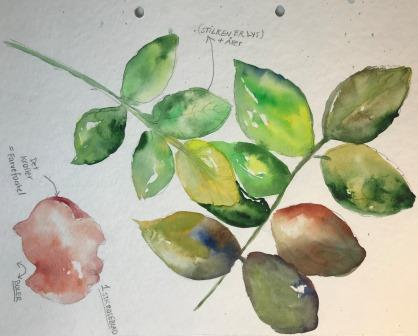 onlinekursus-akvarel