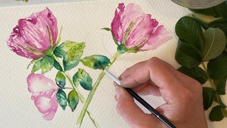hybenrose-akvarelkursus